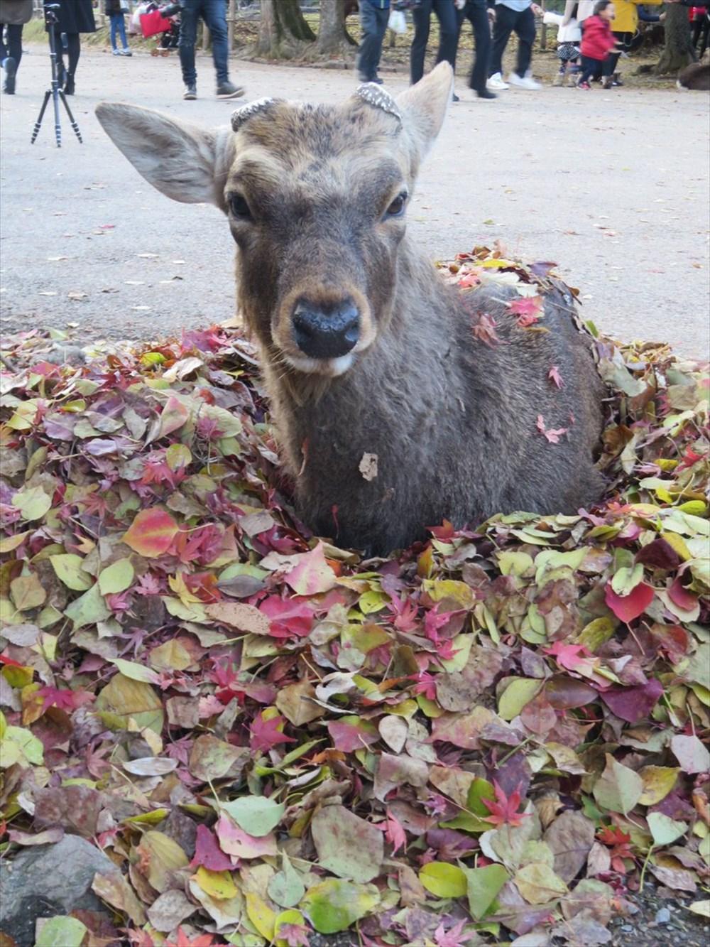 木枯らしに包まれる鹿