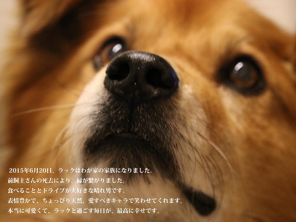 繝ゥ繝・け2