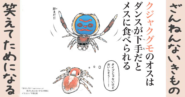 【ざんねんないきもの】クジャクグモのオスはダンスが下手だとメスに食べられる