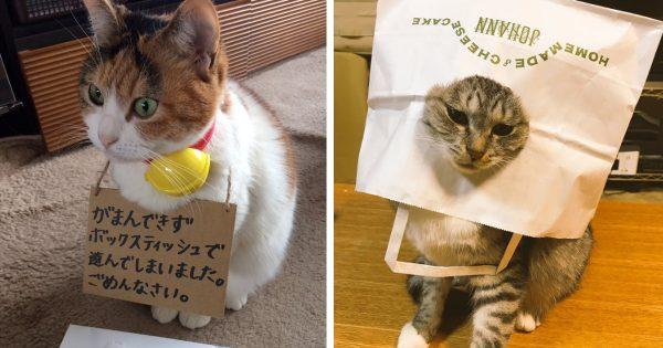 カワイイ子には躾をせよ!ご主人に厳しい罰を与えられたイタズラ猫たち 7選