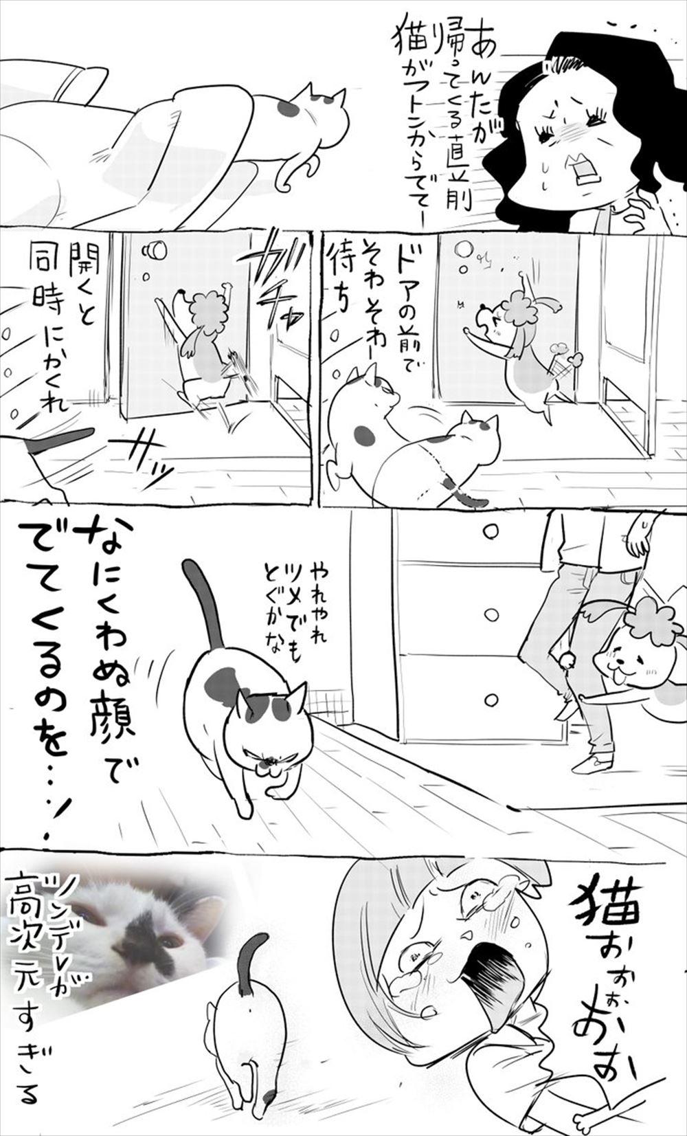 犬と猫の違い By 松本ひで吉