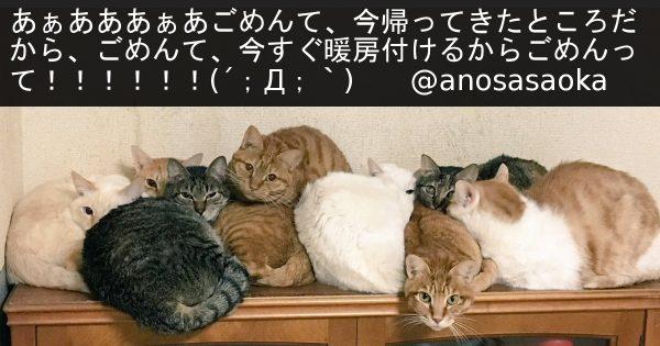 【にゃんこの団子】冬はネコ界で事件が頻発 ← ほぼ暖房を巡るトラブルでした