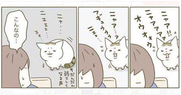 「うちの猫がまた変なことを…」漫画家と2匹のにゃんこが送る日常が平和すぎて癒される11選