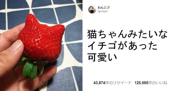 「いいね!」する舞茸に遭遇...!他の「あるモノ」にしか見えない食材 8選