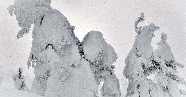 冬にしか見られない絶景。山形県蔵王のスノーモンスターに会いに行く