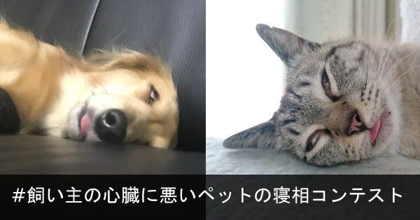 #飼い主の心臓に悪いペットの寝相コンテスト 9選!あの... 生きてますか?(笑)
