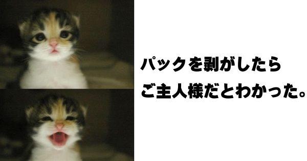 癒しと笑いの奇跡のコラボ!かわいい子猫のボケて 11選
