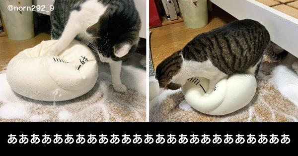 猫を飼っている人ならわかる。「にゃんこVS飼い主」の果てなき攻防に泣き笑う 11選