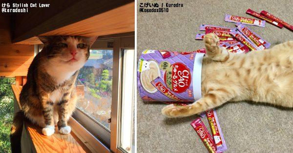 2月22日は猫の日!とにかく笑える怒涛のねこ画像22連発