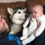 「ねぇ笑ってよ!」ハスキー犬のある行動で、笑わない赤ちゃんの表情がほころぶ!
