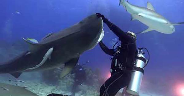 キュートすぎる!巨大サメとダイバーがじゃれる様子に思わず顔がほころぶ!