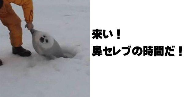 氷もとける激アツの笑いをお届けします!かわいいアザラシのボケて11選