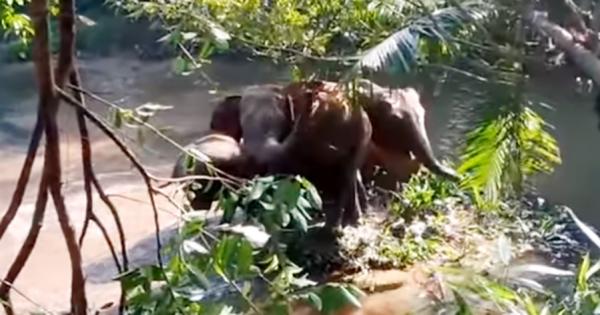 「助けてくれてありがとう!」赤ちゃんゾウを助けたら、仲間のゾウが挨拶をしに来た
