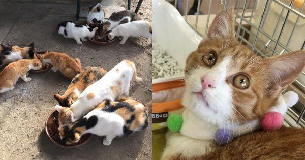 「2年以上は生きられない」野良ネコ保護に乗り出した一人の主婦の願いとは
