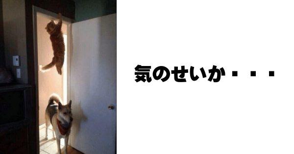犬派VS猫派は休戦!!わんちゃん×ねこちゃん最強コンビの爆笑ボケて11選