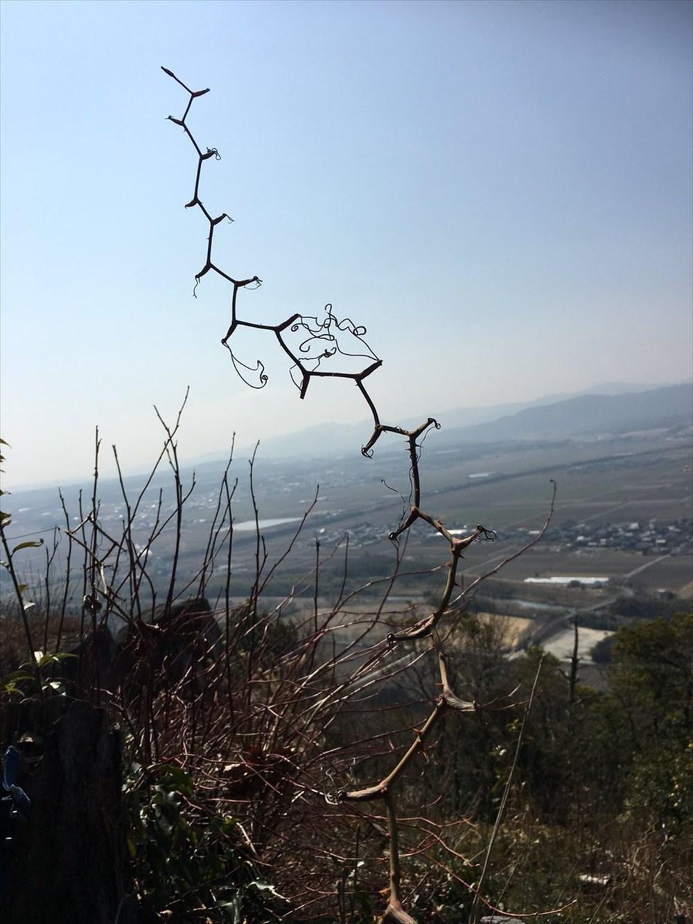 枝がめっちゃ炭化水素鎖