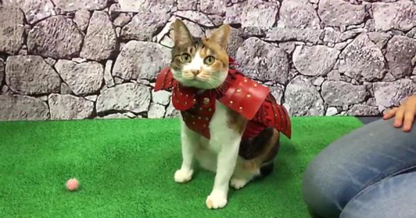 【海外で話題】鎧を着たニャンコが可愛すぎる!着心地抜群で猫も嬉しい!