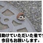 吹いたら負けです!意外なお笑いポテンシャルを発揮するスズメのボケて 11選