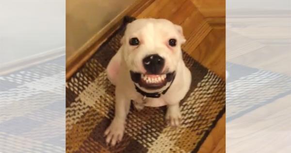 「ハイ、チーズ!」歯ぐき丸出しで笑うワンコが逆に愛おしい!