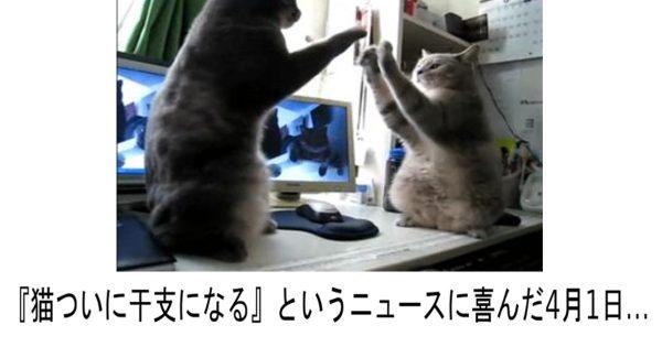 吹いたら寝てください!5秒であなたに笑いを芽吹かせるネコの爆笑ボケて 10選