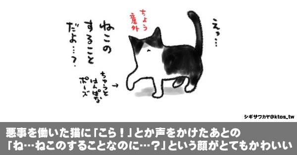 「猫だから許されると思った」気ままな猫との生活にクスっと笑う!(イラスト14枚)