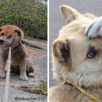イヌが全力で「やだやだー!」と訴える顔が愛しくて笑える件 8選