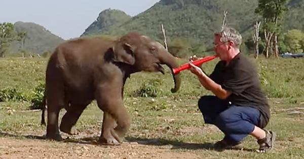 可愛すぎる!クラリネットを演奏する男性に戯れるキュートなゾウの赤ちゃん