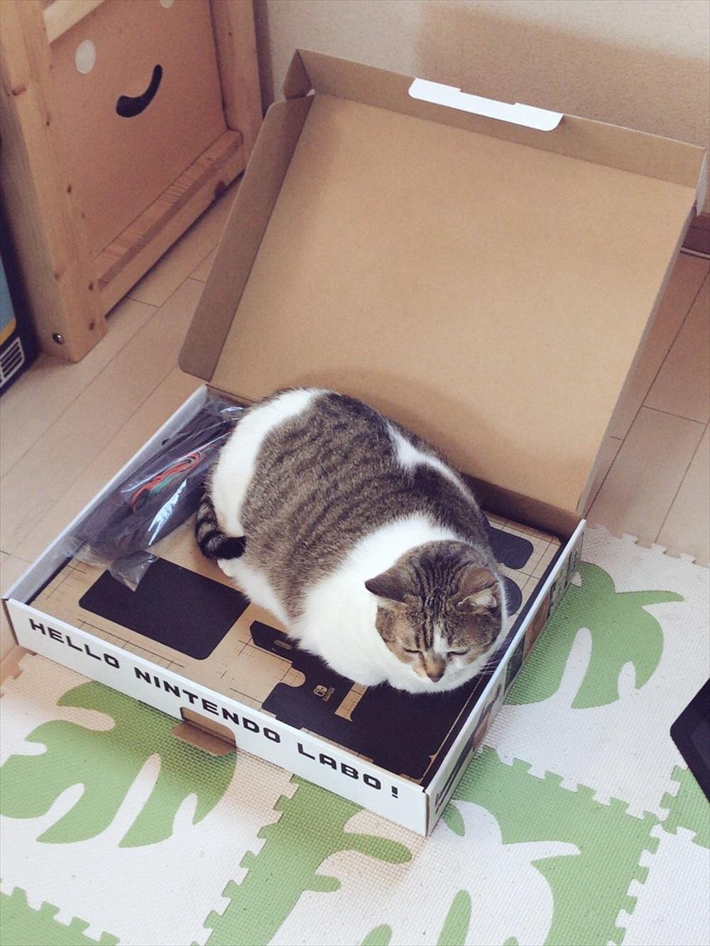 ニンテンドーラボ×猫
