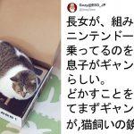 【ゲームよりも箱に夢中】飼い主からNintendo Laboを乗っとる猫 12選