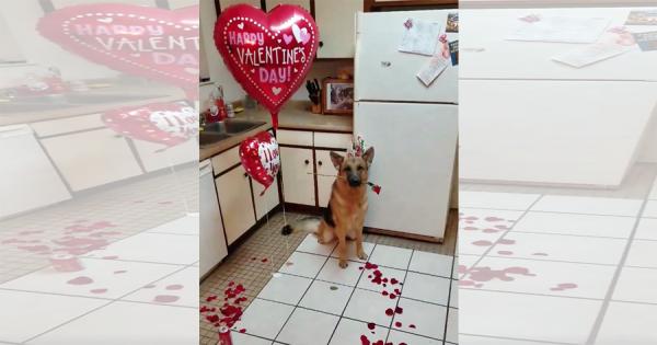 「ご主人大好き♡」ロマンチックな愛犬からのサプライズにビックリ!