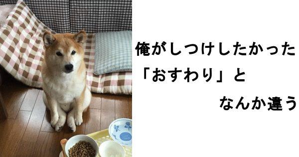 笑って5月病を吹き飛ばせ!元気をくれるかわいい犬のボケて 12選