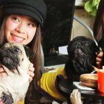 可愛いパグから目が離せない!京都のパグカフェが世界中で話題沸騰
