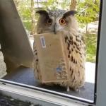 フクロウが窓から手紙を届けに来た!30歳にして魔法使いになった男性が話題