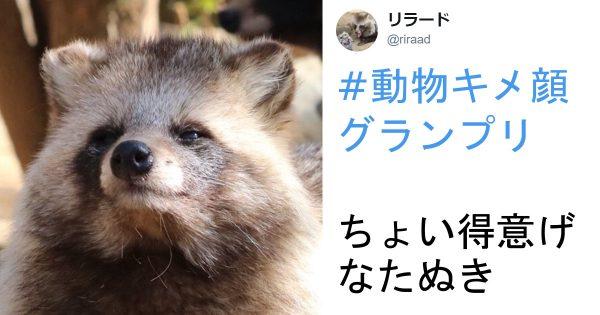 見てくださいこの顔を!「動物キメ顔グランプリ」でみせる表情がステキすぎて惚れる