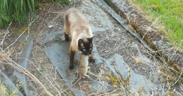 猫から命からがら逃げた子ウサギ、すぐにフクロウに捕まる!自然の摂理を描いた動画が話題