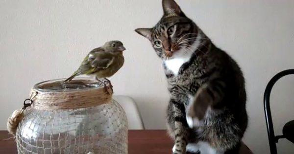 小鳥を肉球でそっとタッチする紳士的なニャンコ!おもてなしっぷりに心温まる
