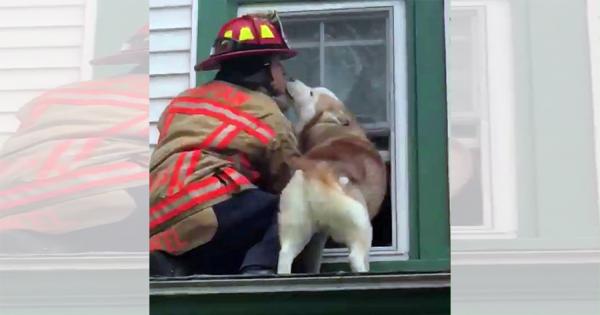 """「助けてくれてありがとう♡」救出に来た消防士にキスをして、""""ありがとう""""を伝えるハスキー犬"""
