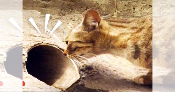 パイプの奥に詰まった生まれたばかりのニャンコ!母猫の見守る中で行われた奇跡の救出劇!