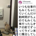 ネコの健気さに泣いた!!飼い主からの「なでなで待ち」姿にキュンと来る愛猫家続出!