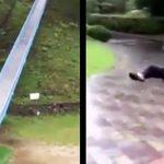 愛媛県の『日本一危険な滑り台』が世界中で話題に!「これは怖すぎる(笑)」「乗ってみたい!」