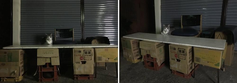ネコ屋台1