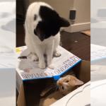 キュートすぎるバトル!箱から出ていってほしい猫 VS 箱の中から出たくない子猫