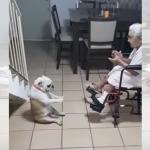 おばあちゃんの歌に合わせて、変なダンスをするフレンチブルが可愛すぎる!(笑)