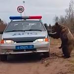 おそロシア!お巡りさんが熊を追いやりに森にやってきたら、逆に熊がパトカーを訪ねてきた