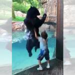 動物園のくまさんが、5歳の男の子と一緒にジャンプ!仲良くはしゃぐ姿が話題!