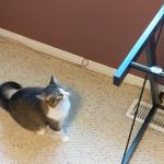 「あれ?着地できないニャン?」ガラスの天板を取ったテーブルの上に飛び乗ろうとする猫