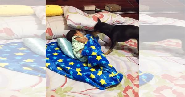 「温かくしてね♪」寝ている赤ちゃんの毛布を掛け直す優しいワンコが素敵すぎる