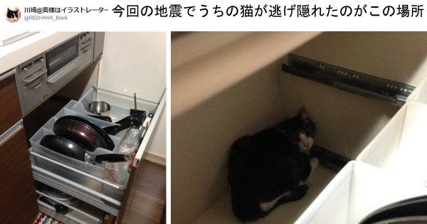 【猫を飼うご家庭へ】地震の際に大切な家族を守るためのアドバイス