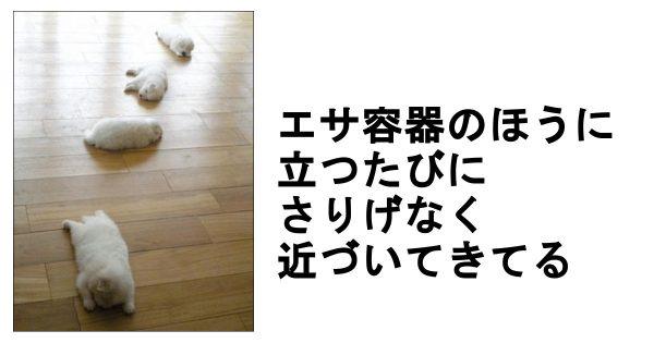 かわいすぎるわんちゃん大集合!抱きしめたくなる子犬の爆笑ボケて 11選