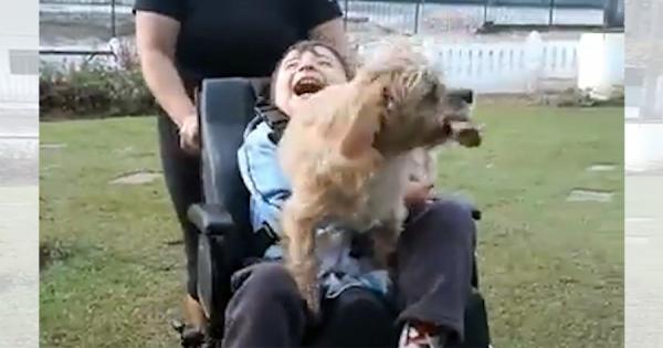 車椅子のご主人を毎日スクールバスのバス停まで迎えに行くワンコ!2人の固い絆に感動
